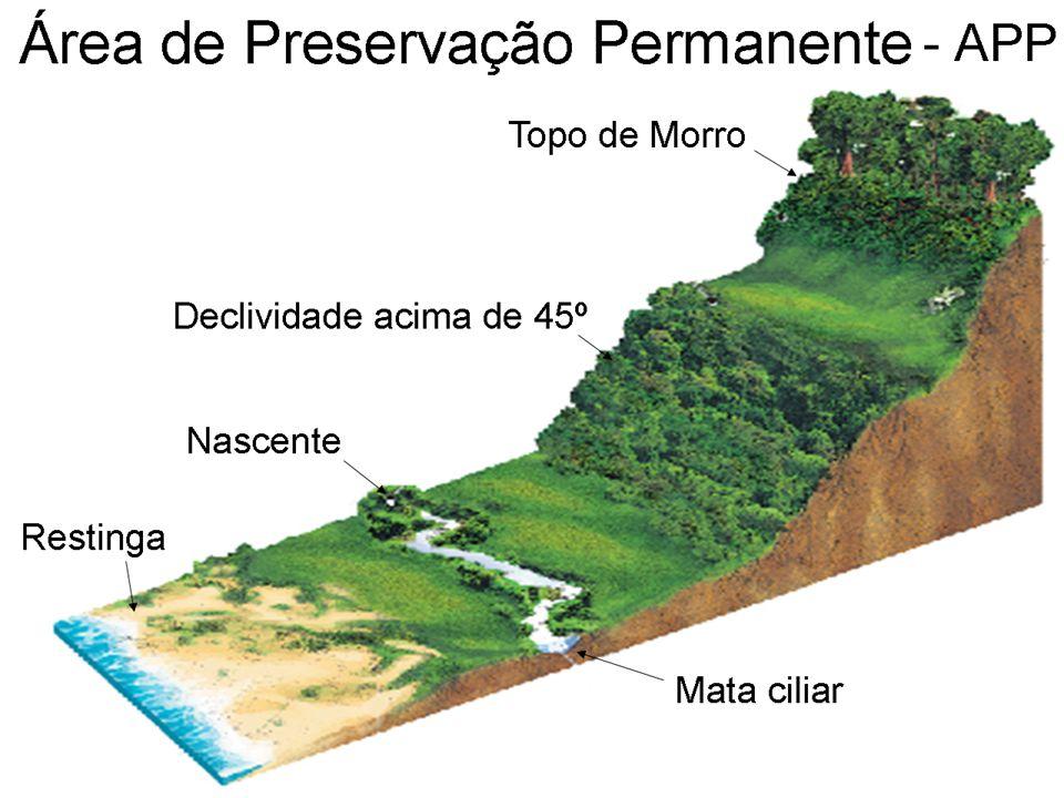 Recomposição das APP's Condução da regeneração natural das espécies nativas.