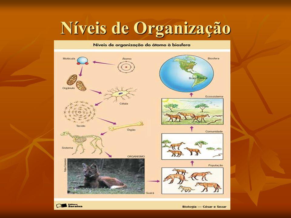 Exercícios 1) Um inseto é um ser vivo e uma pedra não.