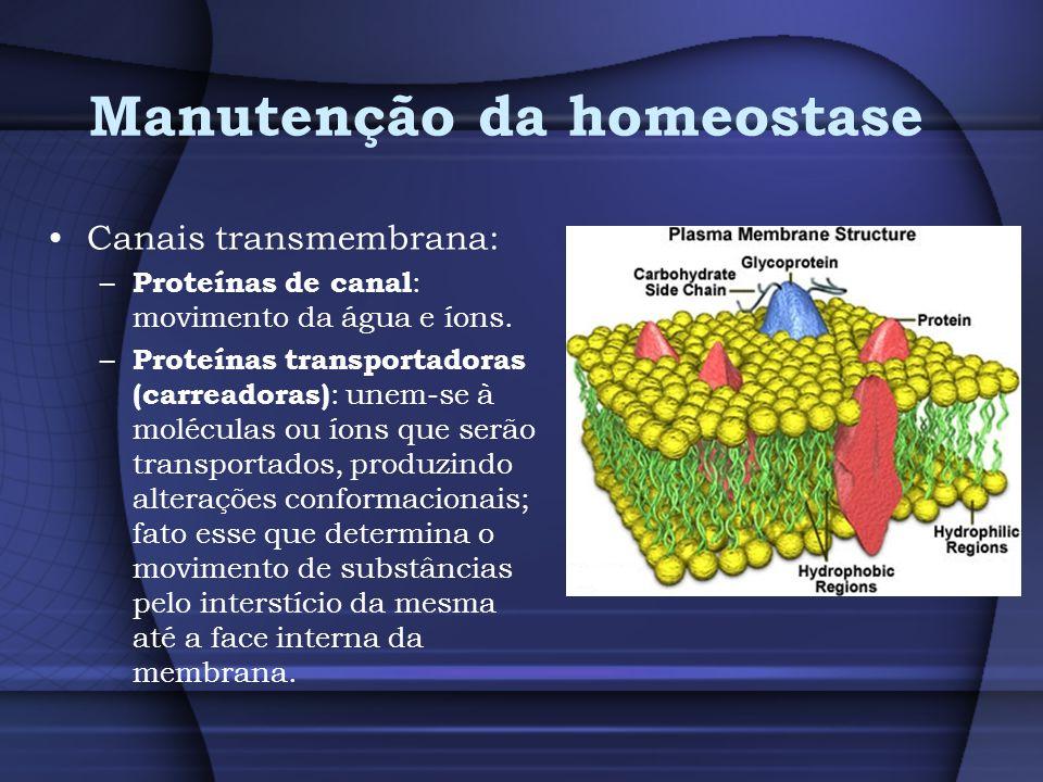Manutenção da homeostase Canais transmembrana: – Proteínas de canal : movimento da água e íons. – Proteínas transportadoras (carreadoras) : unem-se à