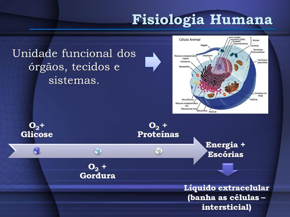 Fisiologia Humana Unidade funcional dos órgãos, tecidos e sistemas. Energia + Escórias Líquido extracelular (banha as células – intersticial)