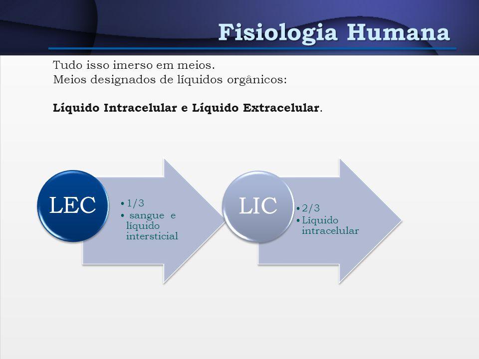 Fisiologia Humana Unidade funcional dos órgãos, tecidos e sistemas. Energia + Escórias Líquido extracelular (banha as células – intersticial) Tudo iss