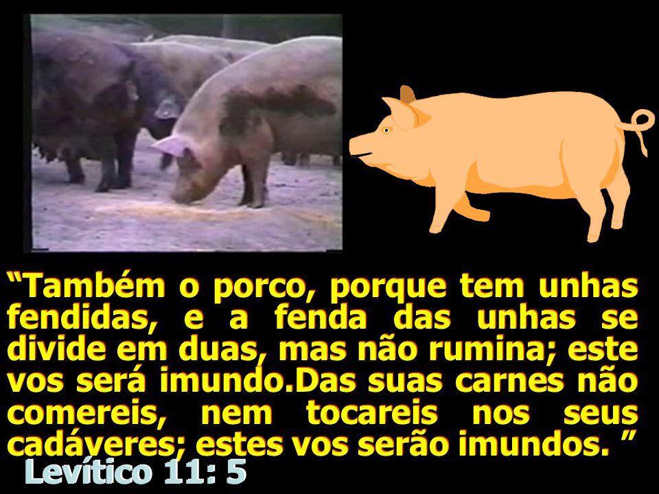 """""""Também o porco, porque tem unhas fendidas, e a fenda das unhas se divide em duas, mas não rumina; este vos será imundo.Das suas carnes não comereis,"""