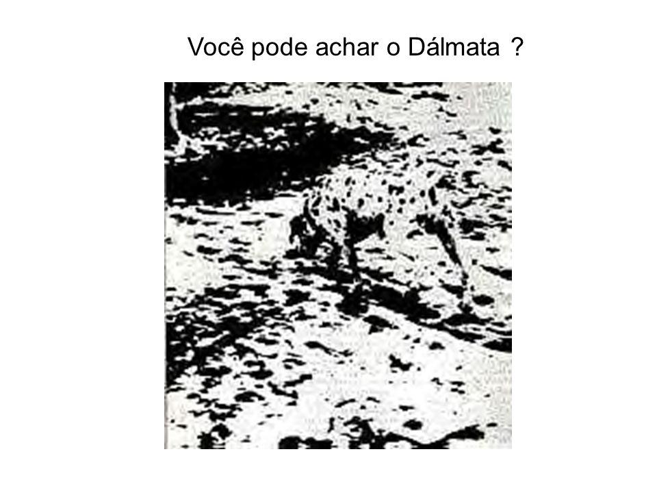 Você pode achar o Dálmata ?