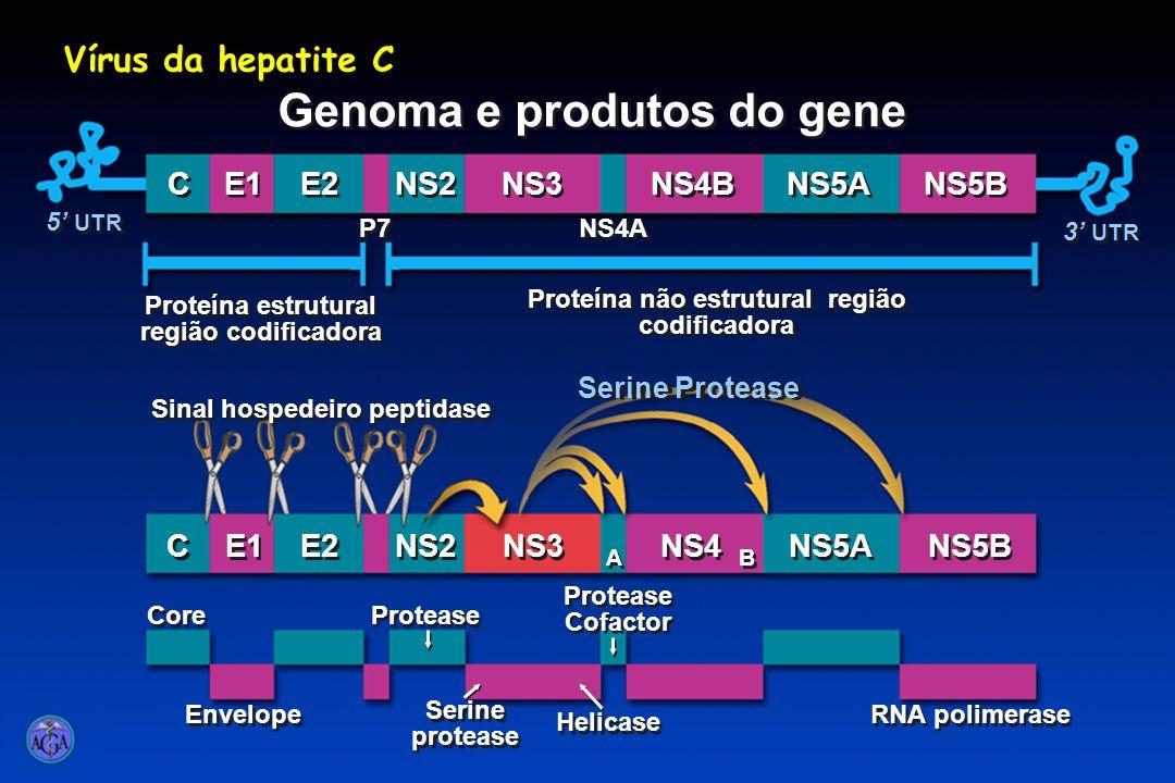 5' UTR 3' UTR C C E1 E2 NS2 NS3 NS4A NS4B NS5A NS5B C C E1 E2 NS2 NS3 A A NS4 NS5A NS5B B B P7 Core Envelope Protease Serine protease Protease Cofactor RNA polimerase Serine Protease Sinal hospedeiro peptidase Helicase Vírus da hepatite C Genoma e produtos do gene Proteína estrutural região codificadora Proteína não estrutural região codificadora