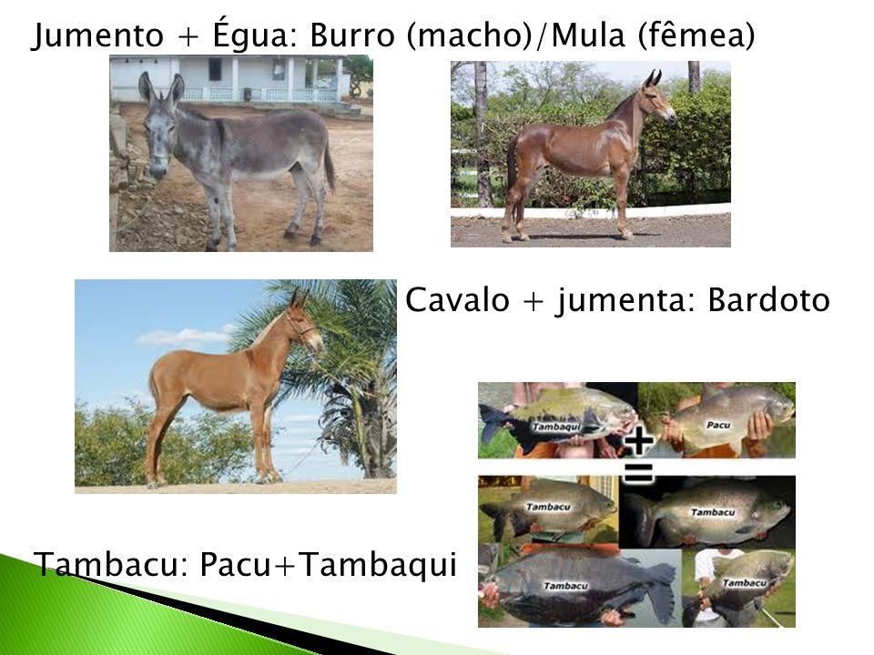 Jumento + Égua: Burro (macho)/Mula (fêmea) Cavalo + jumenta: Bardoto Tambacu: Pacu+Tambaqui