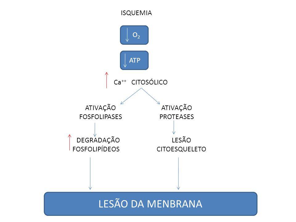 ISQUEMIA Ca ++ CITOSÓLICO O 2 ATP ATIVAÇÃO FOSFOLIPASES ATIVAÇÃO PROTEASES DEGRADAÇÃO FOSFOLIPÍDEOS LESÃO DA MENBRANA LESÃO CITOESQUELETO