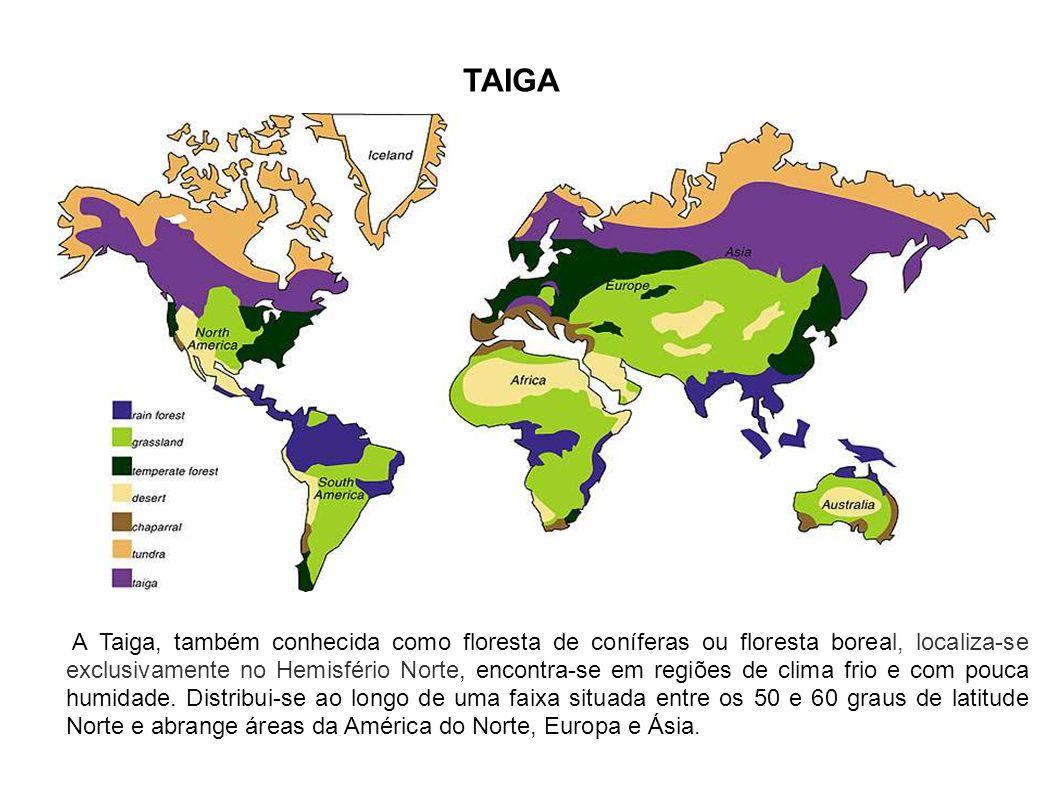 TAIGA A Taiga, também conhecida como floresta de coníferas ou floresta boreal, localiza-se exclusivamente no Hemisfério Norte, encontra-se em regiões de clima frio e com pouca humidade.