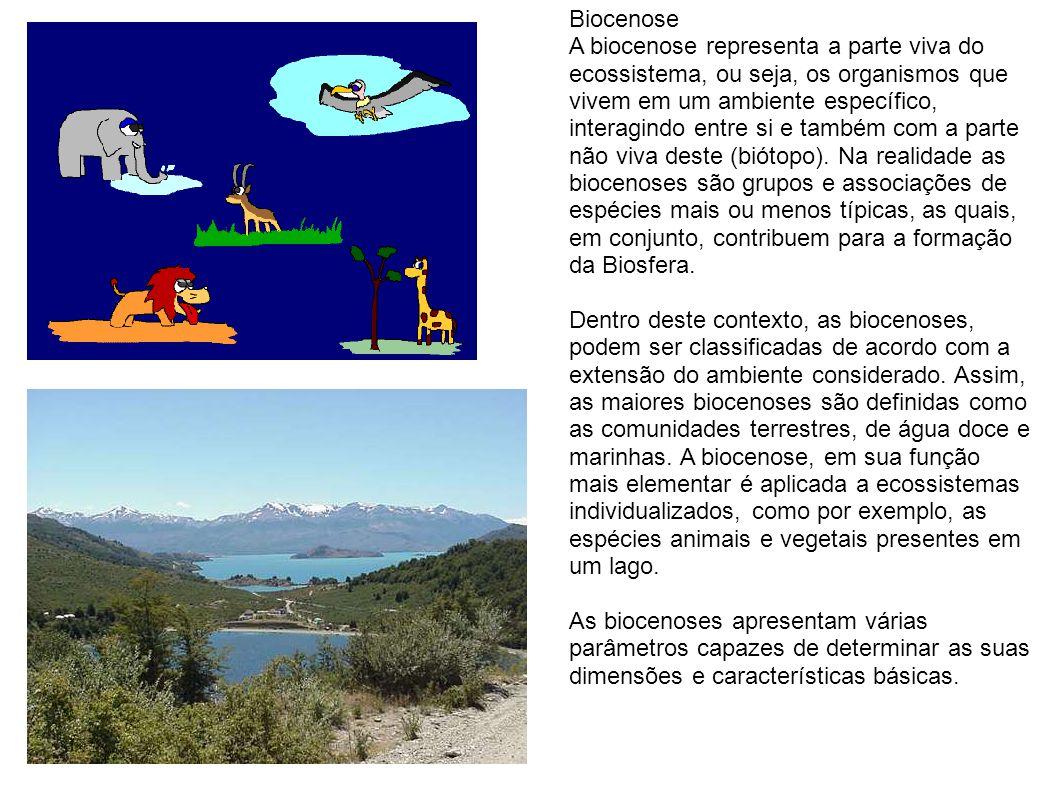 Tundra Alpina A Tundra Alpina encontra-se em vários países e situa-se no topo das altas montanhas.
