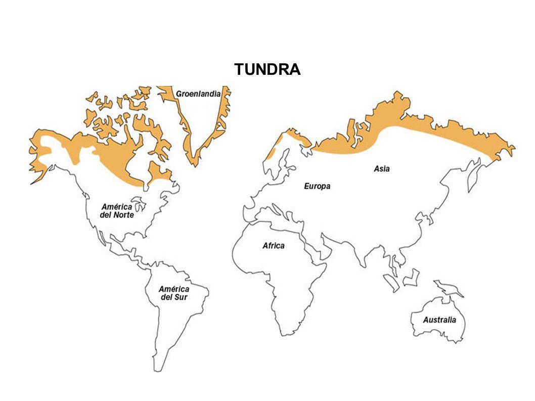 O termo Tundra deriva da palavra finlandesa Tunturia, que significa planície sem árvores.