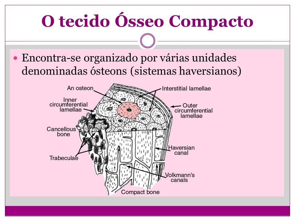 O tecido Ósseo Compacto Encontra-se organizado por várias unidades denominadas ósteons (sistemas haversianos)