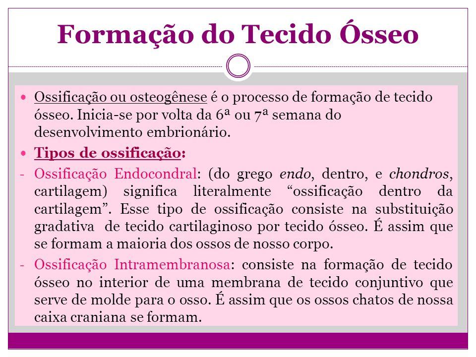 Formação do Tecido Ósseo Ossificação ou osteogênese é o processo de formação de tecido ósseo.