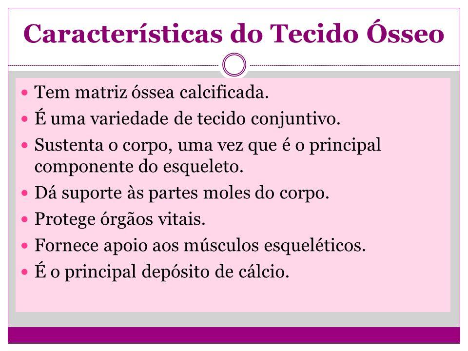 Características do Tecido Ósseo Tem matriz óssea calcificada.