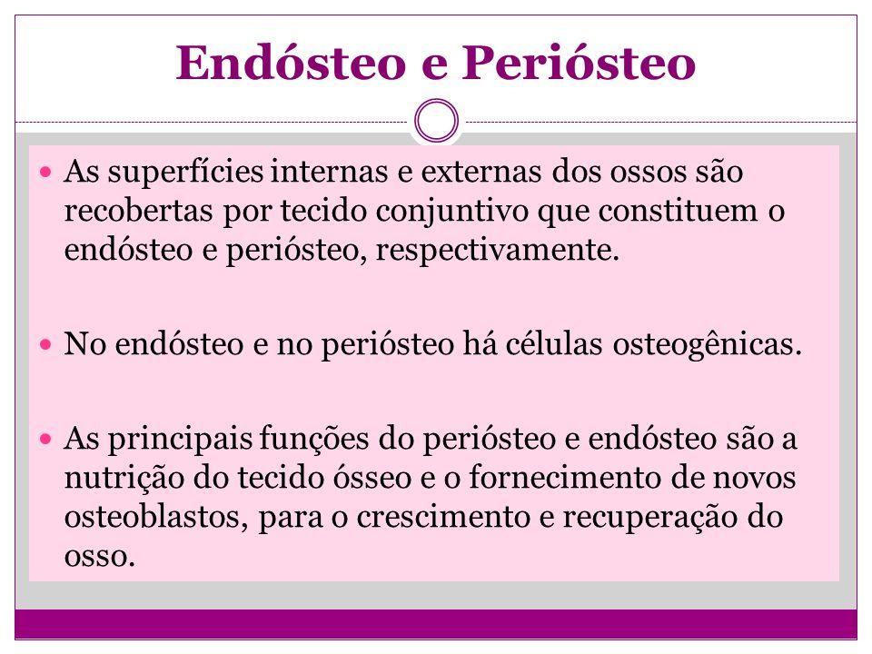 Endósteo e Periósteo As superfícies internas e externas dos ossos são recobertas por tecido conjuntivo que constituem o endósteo e periósteo, respectivamente.