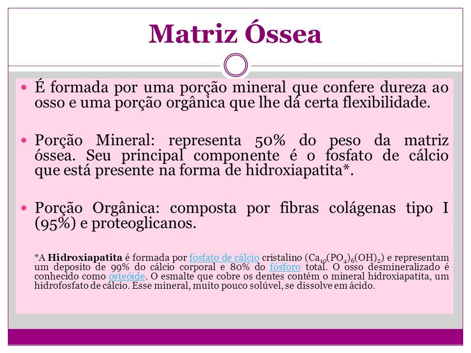 Matriz Óssea É formada por uma porção mineral que confere dureza ao osso e uma porção orgânica que lhe dá certa flexibilidade.