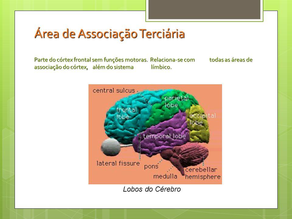 O lobo temporal é atacado na esquizofrenia.O lobo temporal é atacado na esquizofrenia.