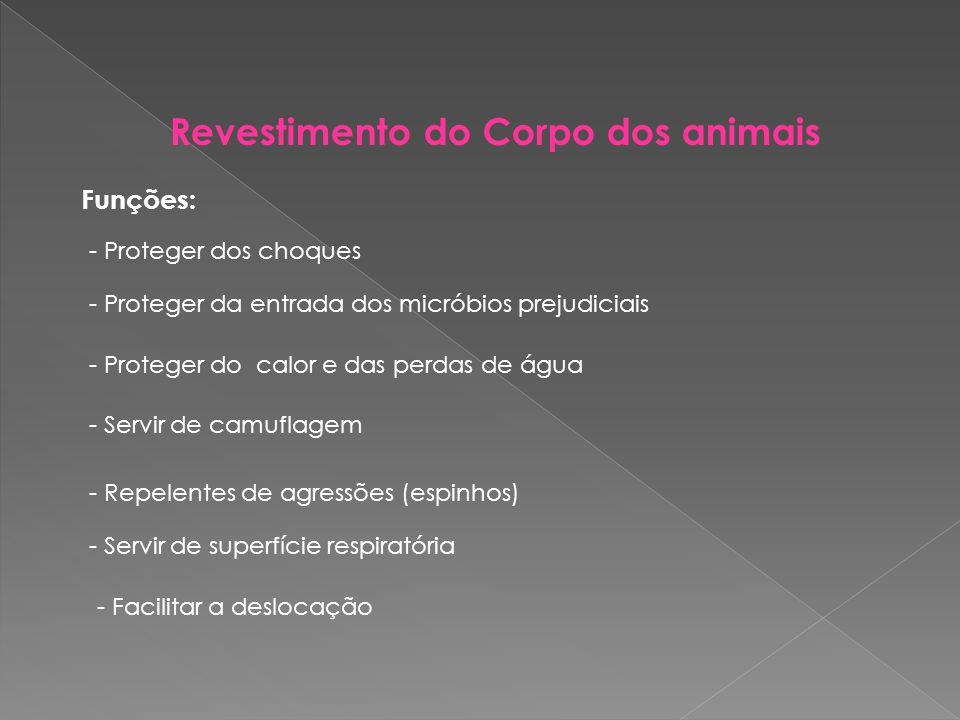 Revestimento do Corpo dos animais Funções: - Proteger dos choques - Proteger da entrada dos micróbios prejudiciais - Proteger do calor e das perdas de