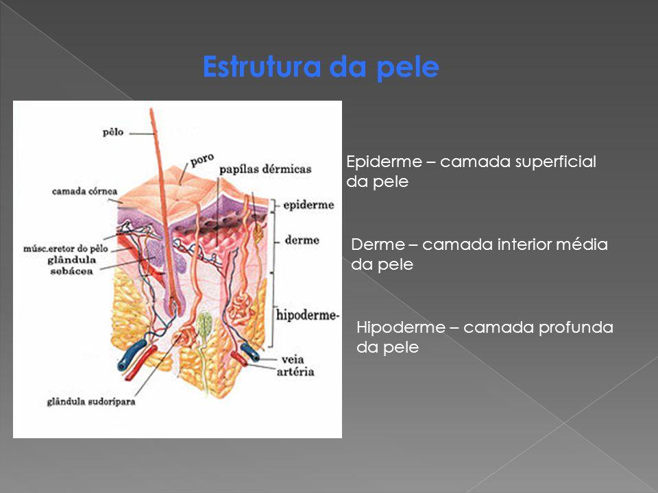 Estrutura da pele Epiderme – camada superficial da pele Derme – camada interior média da pele Hipoderme – camada profunda da pele