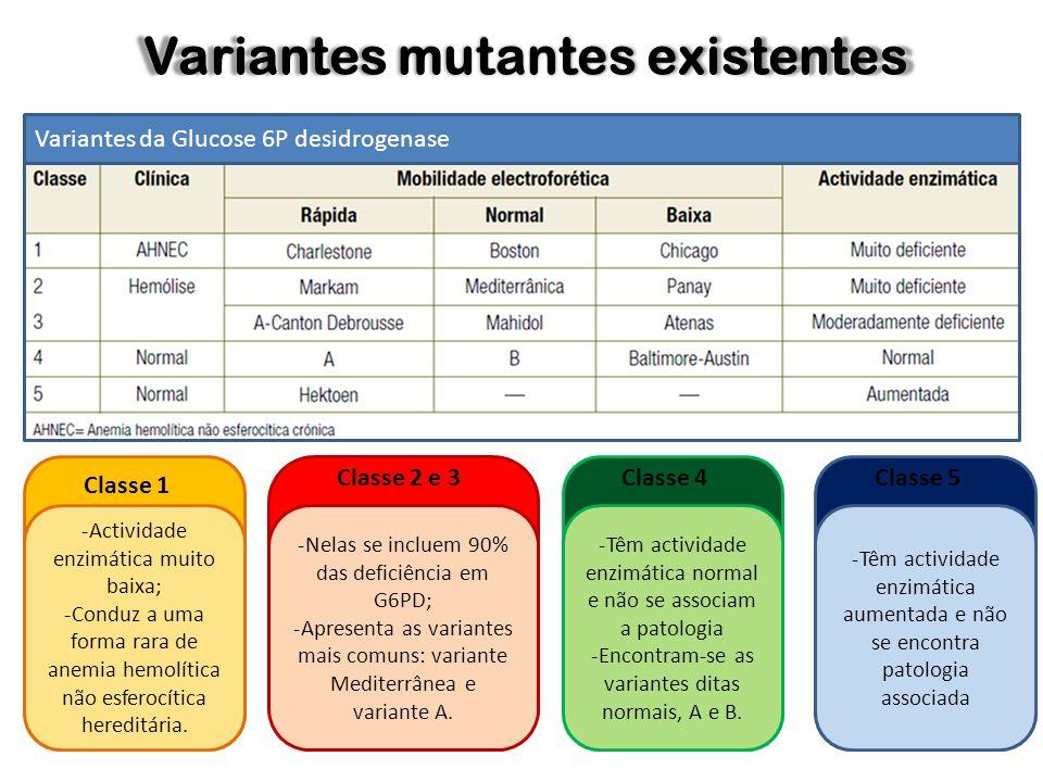 Variantes mutantes existentes Variantes da Glucose 6P desidrogenase -Actividade enzimática muito baixa; -Conduz a uma forma rara de anemia hemolítica