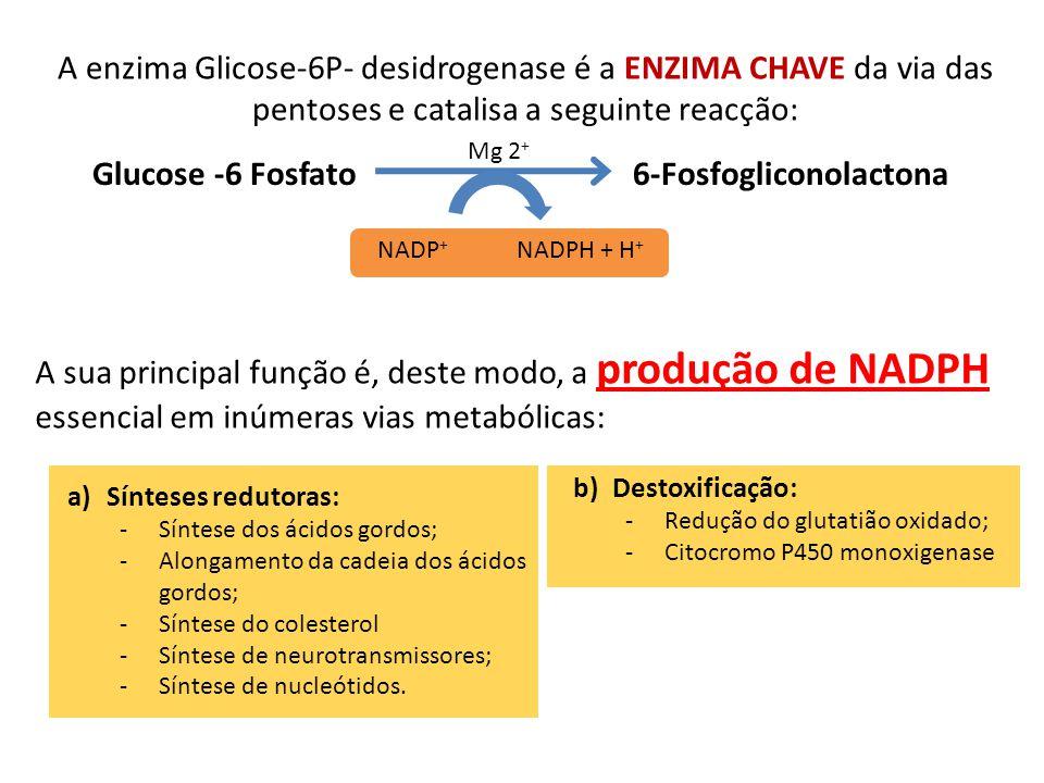 A enzima Glicose-6P- desidrogenase é a ENZIMA CHAVE da via das pentoses e catalisa a seguinte reacção: Glucose -6 Fosfato 6-Fosfogliconolactona NADP +