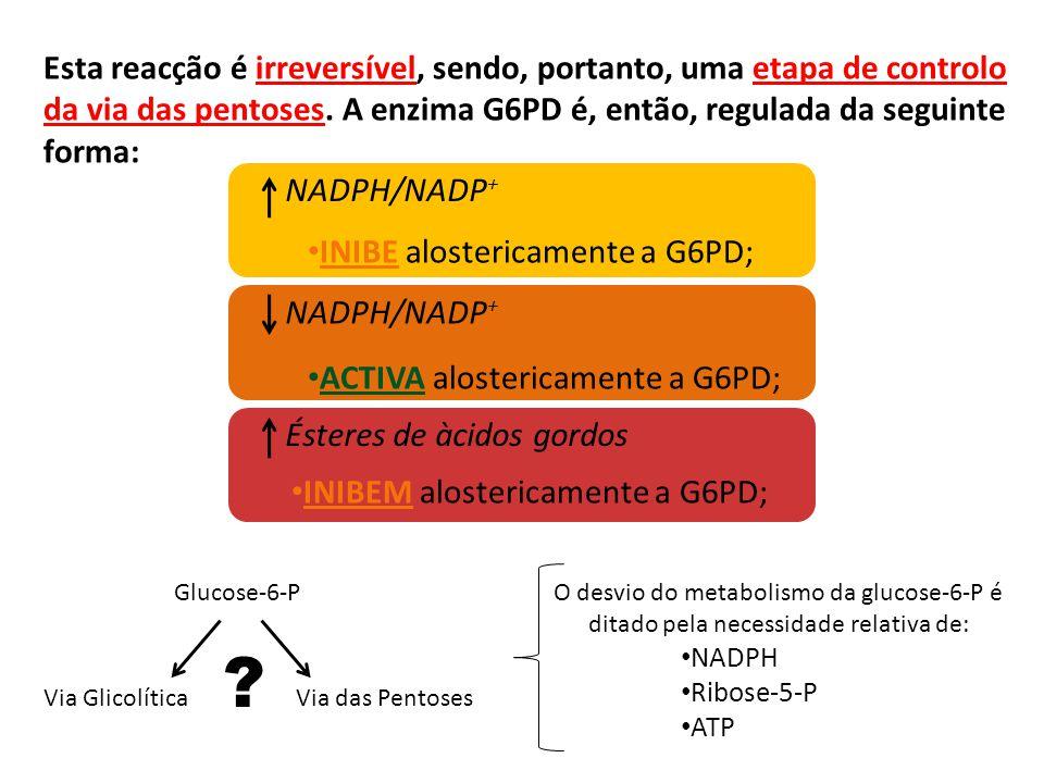 Esta reacção é irreversível, sendo, portanto, uma etapa de controlo da via das pentoses. A enzima G6PD é, então, regulada da seguinte forma: NADPH/NAD