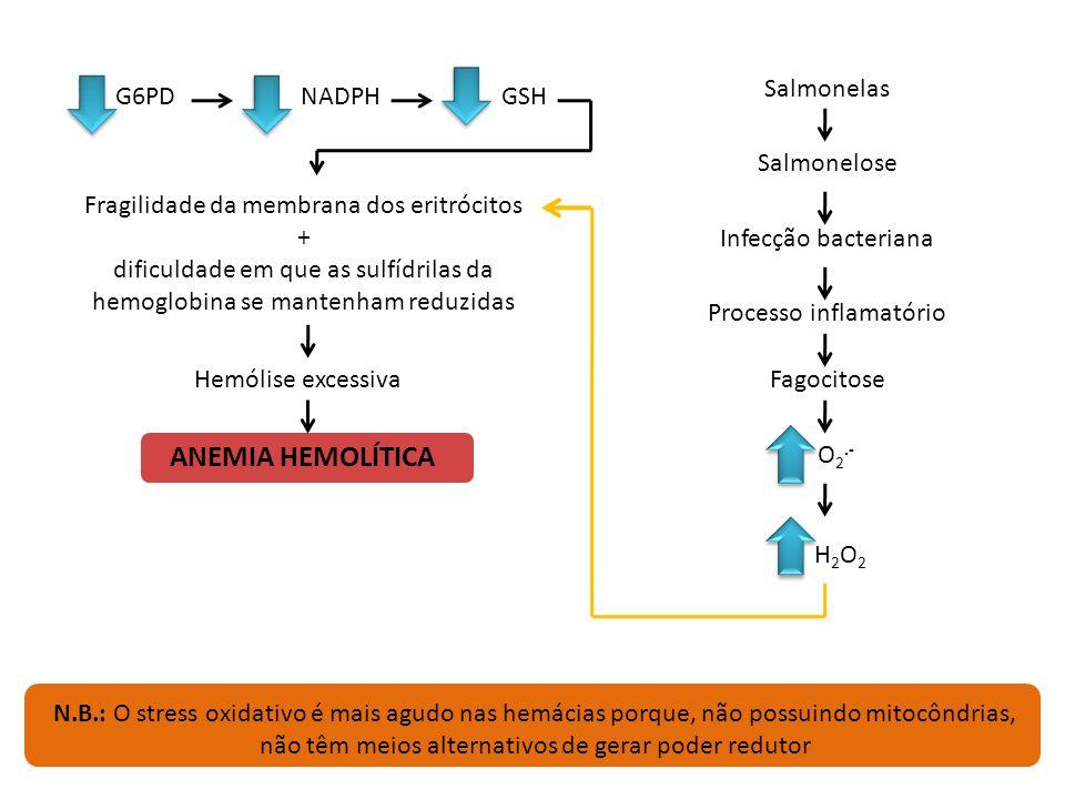 Salmonelas NADPH, nas hemácias, vai reduzir a forma dissulfeto do glutatião para a forma sulfidrílica (os electrões vão do NADPH para o FAD ligado à r