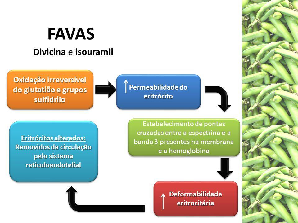 Divicina e isouramil Oxidação irreversível do glutatião e grupos sulfidrilo Permeabilidade do eritrócito Deformabilidade eritrocitária Estabelecimento