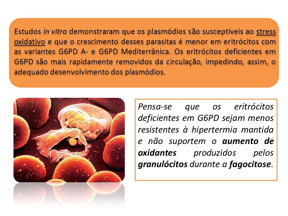Estudos in vitro demonstraram que os plasmódios são susceptíveis ao stress oxidativo e que o crescimento desses parasitas é menor em eritrócitos com a