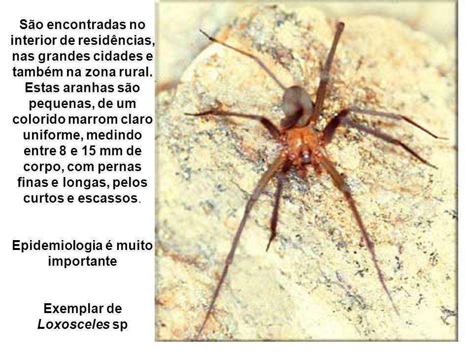 São encontradas no interior de residências, nas grandes cidades e também na zona rural.