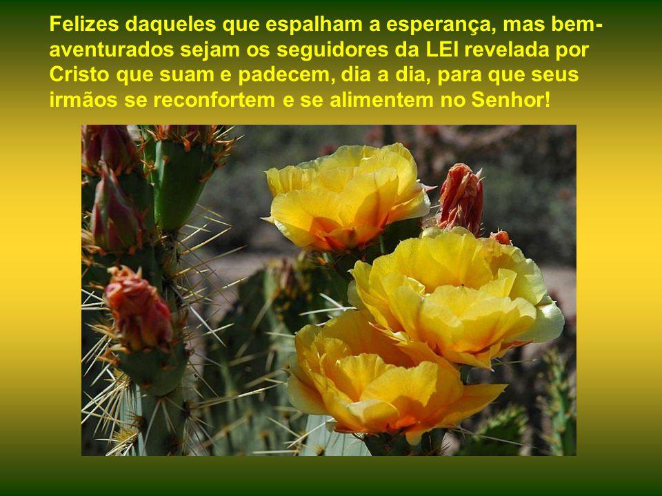 A flor é uma linda promessa, onde se encontre. O fruto maduro, porém, é alimento para hoje.