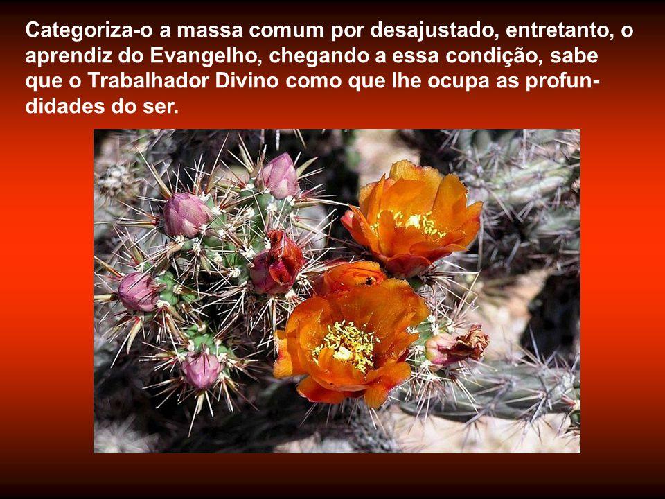 Para o mundo, será inadaptado e louco. Para Jesus, é o vaso das bênçãos.
