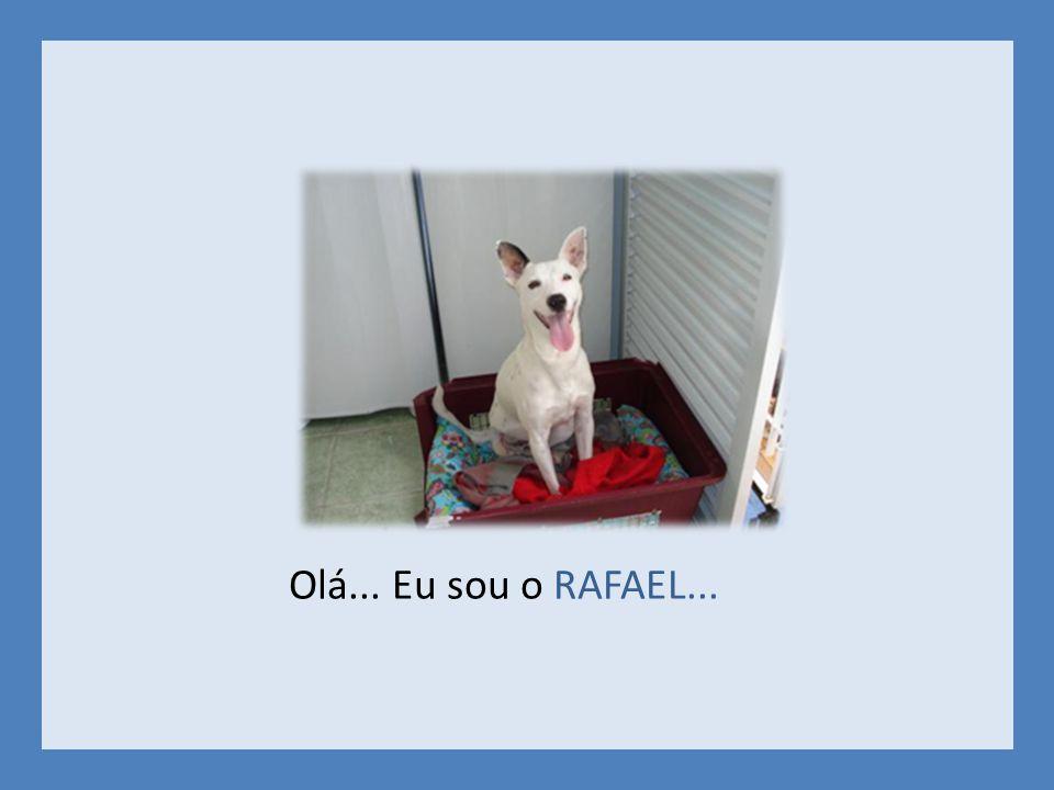 Olá... Eu sou o RAFAEL...