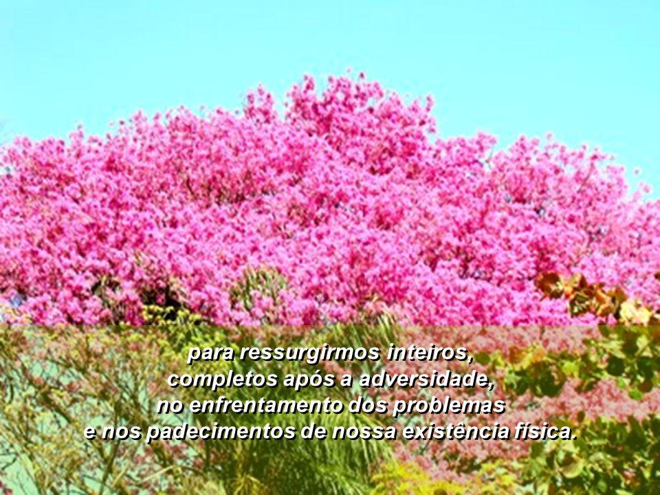 Como diz Cecília Meireles, temos que aprender a nos deixar cortar – podar as arestas do orgulho, da ambição, da vaidade,