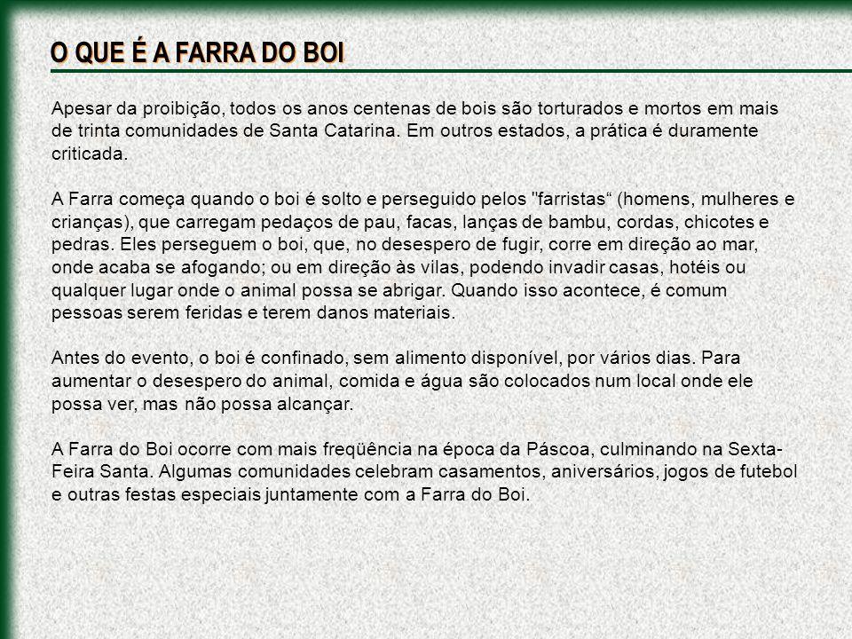 Apesar da proibição, todos os anos centenas de bois são torturados e mortos em mais de trinta comunidades de Santa Catarina. Em outros estados, a prát
