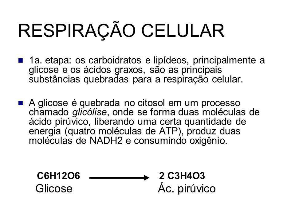 1a. etapa: os carboidratos e lipídeos, principalmente a glicose e os ácidos graxos, são as principais substâncias quebradas para a respiração celular.