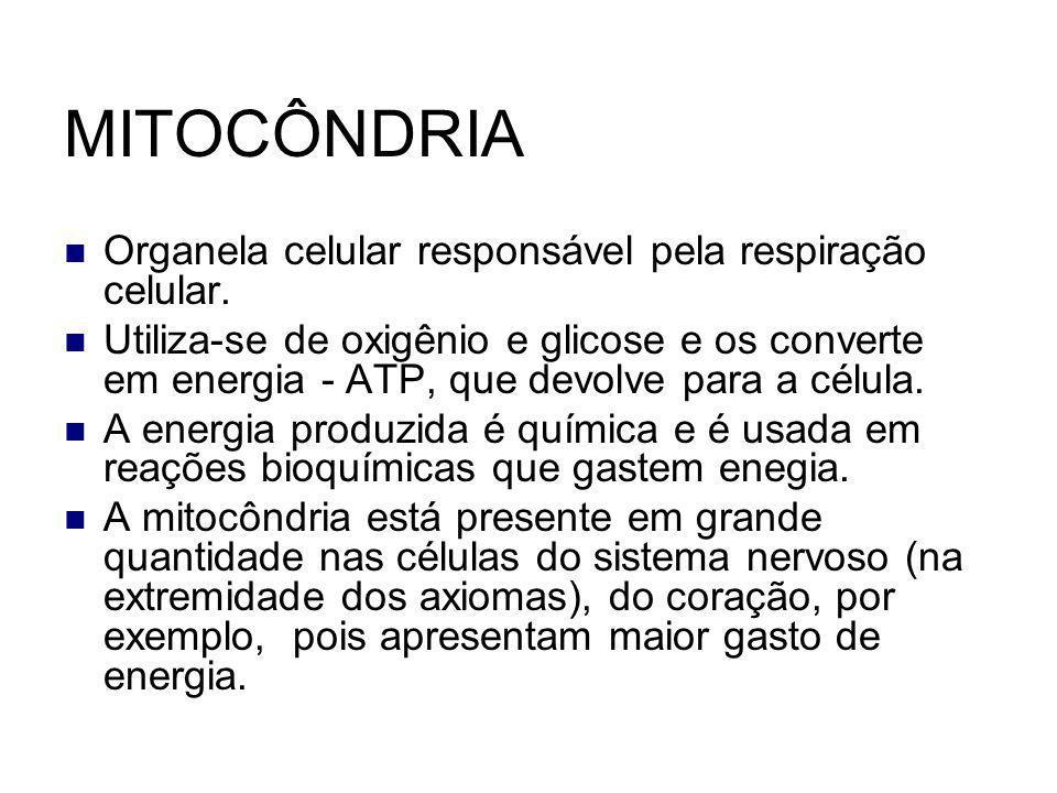 MITOCÔNDRIA Organela celular responsável pela respiração celular. Utiliza-se de oxigênio e glicose e os converte em energia - ATP, que devolve para a