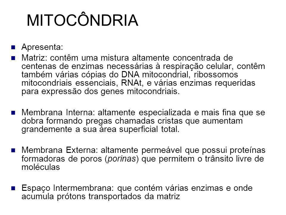 MITOCÔNDRIA Membrana Interna: contêm proteínas com três tipos de funções: 1.