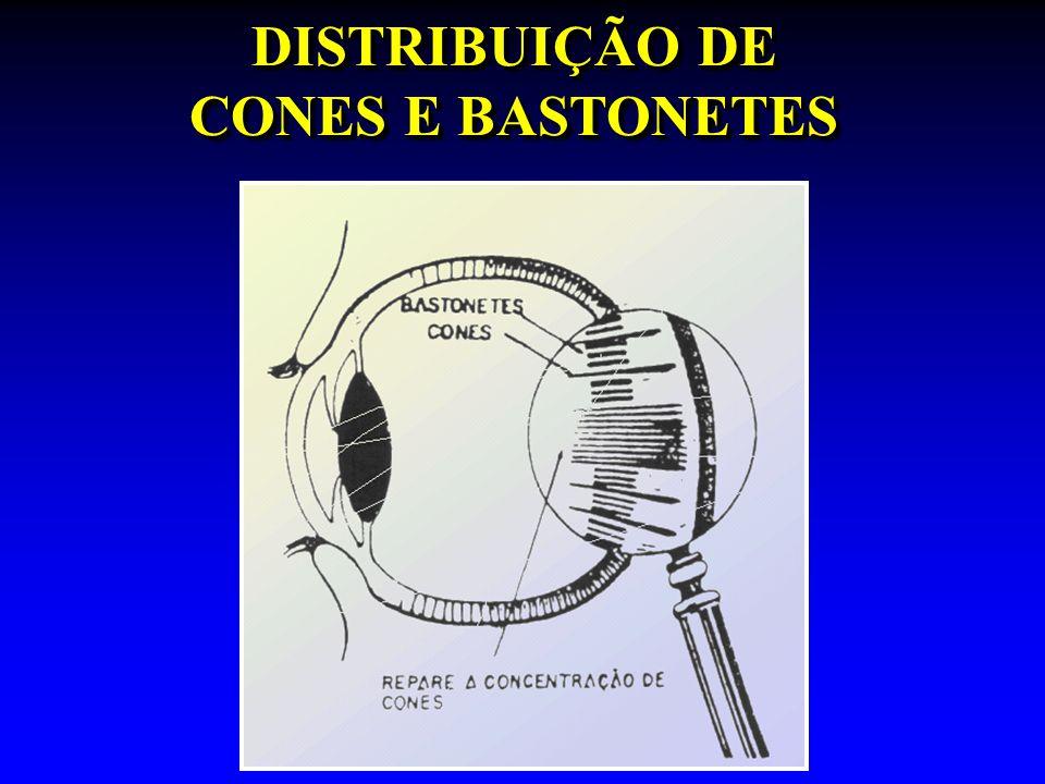 DISTRIBUIÇÃO DE CONES E BASTONETES