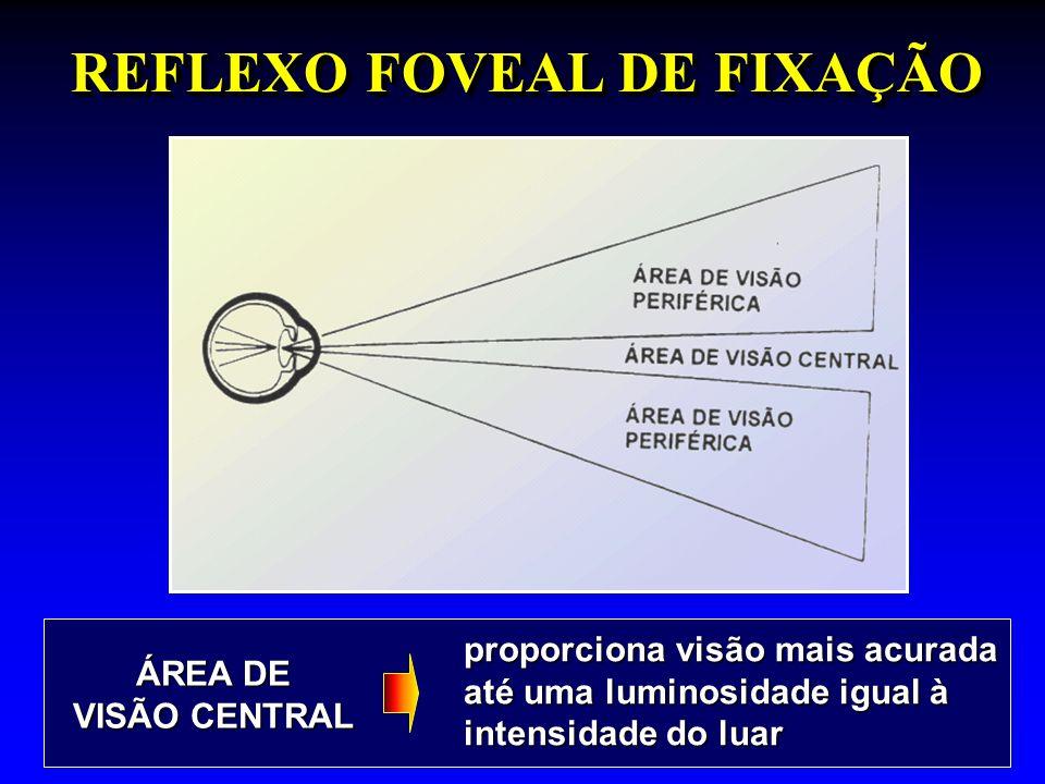 REFLEXO FOVEAL DE FIXAÇÃO proporciona visão mais acurada até uma luminosidade igual à intensidade do luar ÁREA DE VISÃO CENTRAL