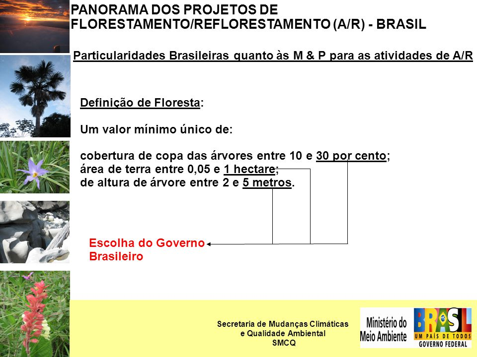 PANORAMA DOS PROJETOS DE FLORESTAMENTO/REFLORESTAMENTO (A/R) - BRASIL Particularidades Brasileiras quanto às M & P para as atividades de A/R Definição de Floresta: Um valor mínimo único de: cobertura de copa das árvores entre 10 e 30 por cento; área de terra entre 0,05 e 1 hectare; de altura de árvore entre 2 e 5 metros.