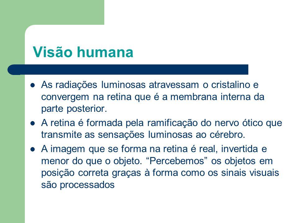 Visão humana As radiações luminosas atravessam o cristalino e convergem na retina que é a membrana interna da parte posterior. A retina é formada pela