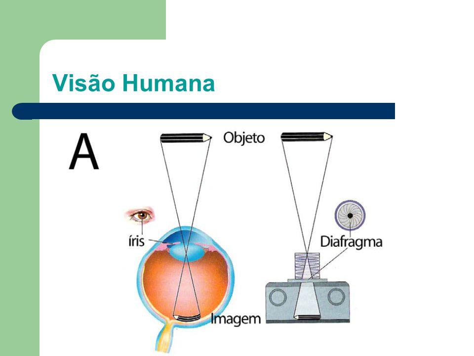 Visão Humana