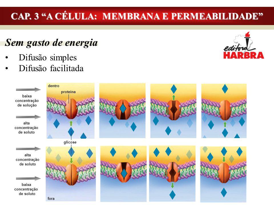 """Sem gasto de energia Difusão simples Difusão facilitada CAP. 3 """"A CÉLULA: MEMBRANA E PERMEABILIDADE"""" baixa concentração de solução baixa concentração"""