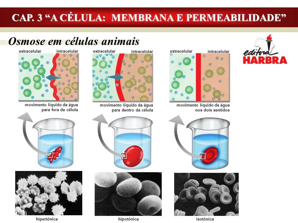 """Osmose em células animais CAP. 3 """"A CÉLULA: MEMBRANA E PERMEABILIDADE"""" extracelular intracelular movimento líquido da água para fora da célula extrace"""