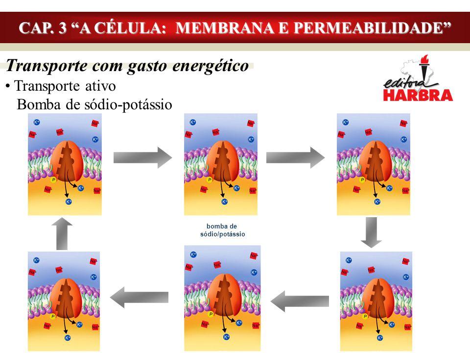 """Transporte com gasto energético Transporte ativo Bomba de sódio-potássio CAP. 3 """"A CÉLULA: MEMBRANA E PERMEABILIDADE"""" bomba de sódio/potássio"""