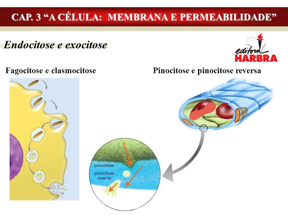 """Endocitose e exocitose Fagocitose e clasmocitosePinocitose e pinocitose reversa CAP. 3 """"A CÉLULA: MEMBRANA E PERMEABILIDADE"""" pinocitose reserva"""