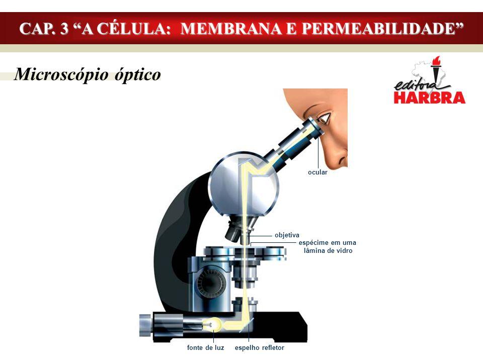 """Microscópio óptico CAP. 3 """"A CÉLULA: MEMBRANA E PERMEABILIDADE"""" ocular objetiva espécime em uma lâmina de vidro fonte de luz espelho refletor"""