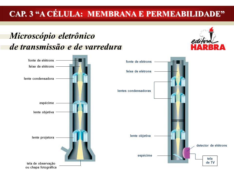 """Microscópio eletrônico de transmissão e de varredura CAP. 3 """"A CÉLULA: MEMBRANA E PERMEABILIDADE"""" fonte de elétrons feixe de elétrons lente condensado"""