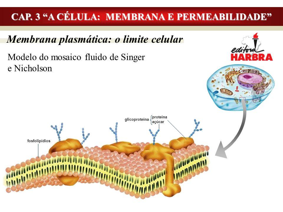 """Membrana plasmática: o limite celular Modelo do mosaico fluido de Singer e Nicholson CAP. 3 """"A CÉLULA: MEMBRANA E PERMEABILIDADE"""" fosfolipídios proteí"""