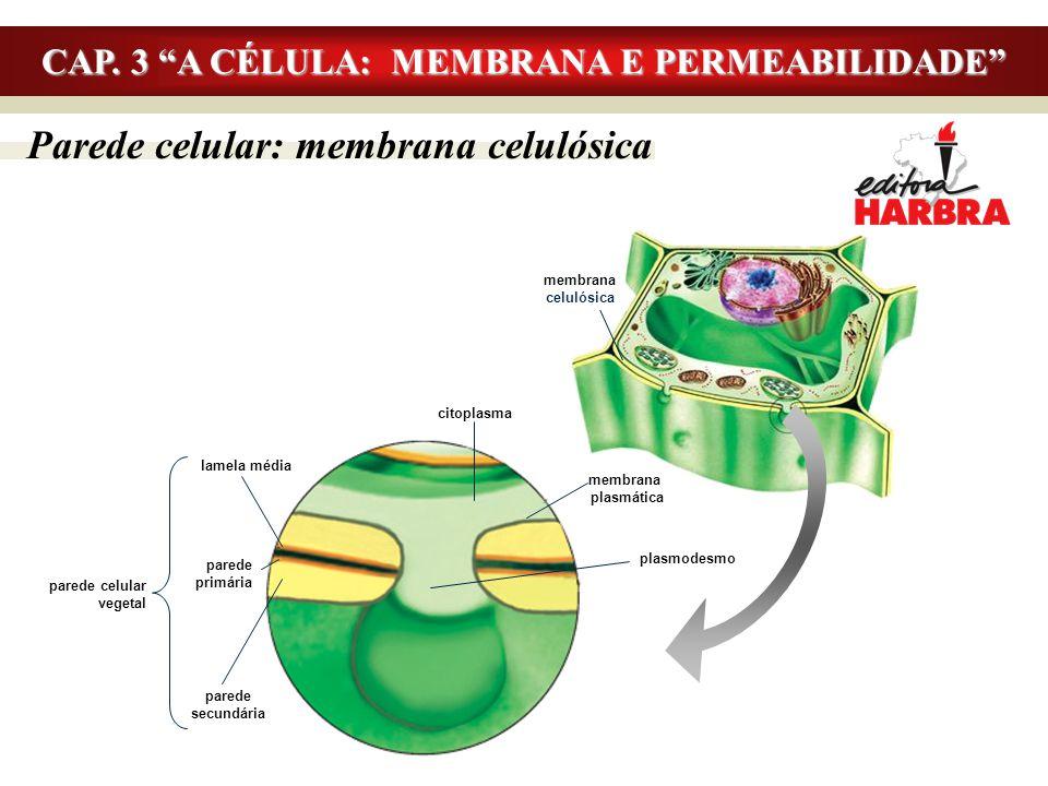 """Parede celular: membrana celulósica CAP. 3 """"A CÉLULA: MEMBRANA E PERMEABILIDADE"""" membrana celulósica plasmodesmo membrana plasmática citoplasma lamela"""