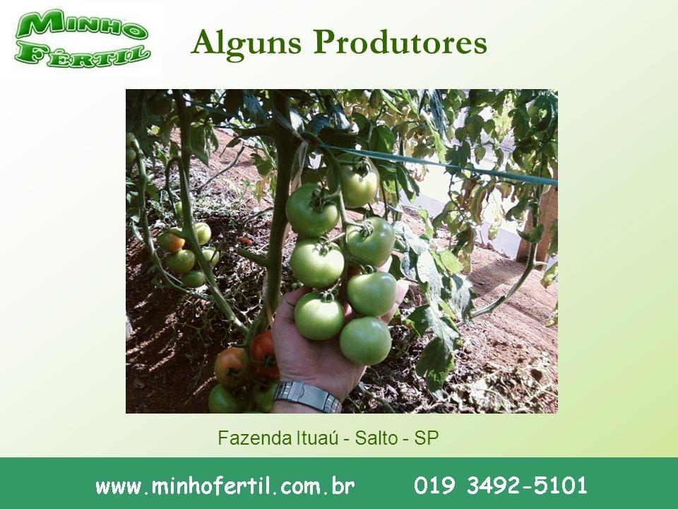 Alguns Produtores Fazenda Ituaú - Salto - SP